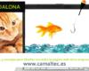 Solo 3 consejos para diseñar con éxito la página web de tu empresa 100x80 c Diseño y Desarrolllo web en Badalona