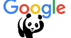 Google Panda es quien manda 300x160 c Posicionamiento web Teruel